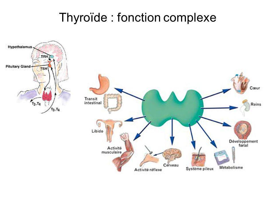 Thyroïde : fonction complexe