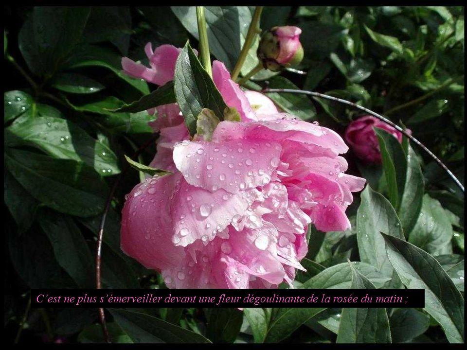 Cest ne plus sémerveiller devant une fleur dégoulinante de la rosée du matin ;