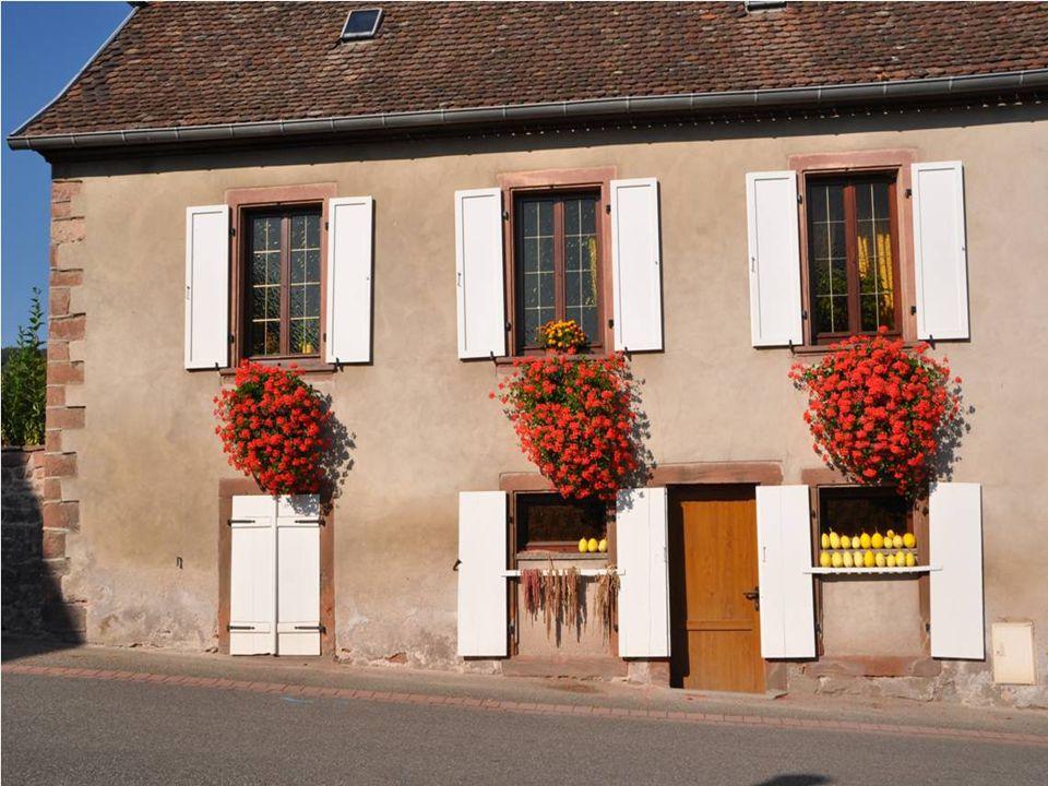 En se promenant au hasard vous découvrirez ainsi: De nombreuses maisons de vignerons du 16 ième et 17 ième siècle Les habitants sont appelés les Boerschois et les boerschoises