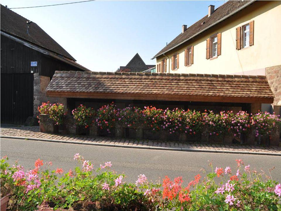 Ces belles maisons typiques comportent généralement Une grande porte cochère qui mène à la cour intérieure Et une cave à moitié enterrée