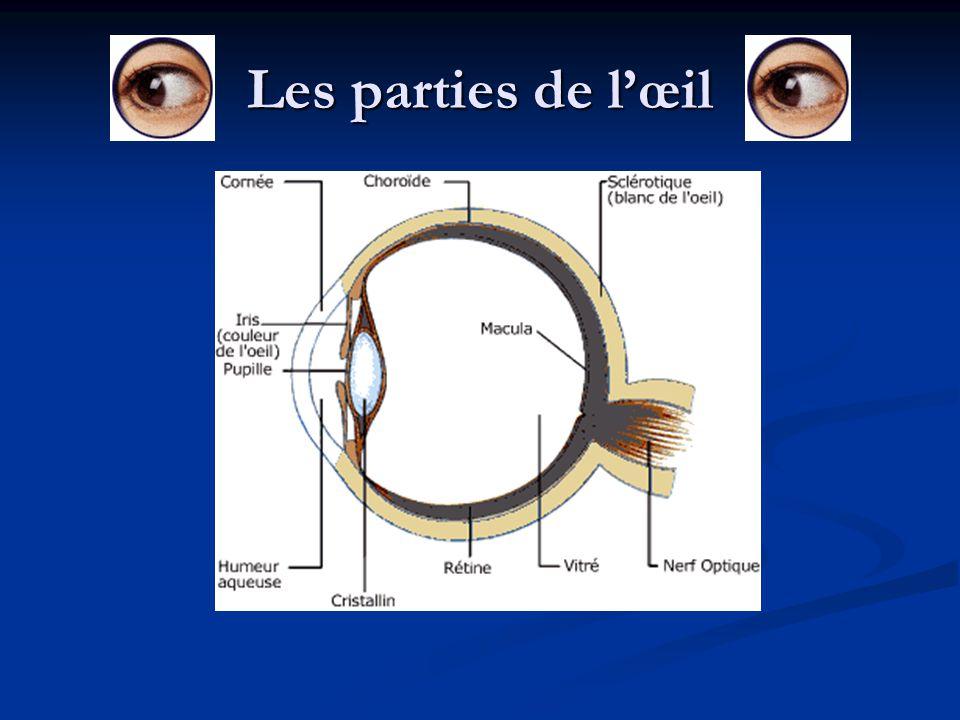 Choroïde: La choroïde c est une couche vasculaire de couleur noire qui couvre les 3/5 la partie arrière du globe oculaire.