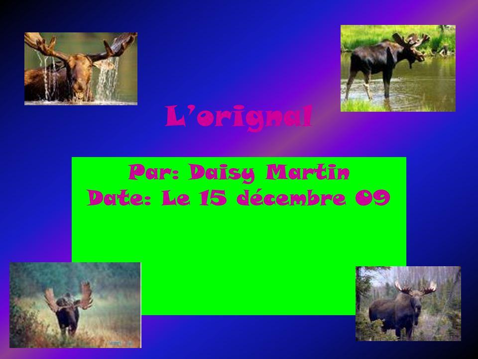Lorignal Par: Daisy Martin Date: Le 15 décembre 09