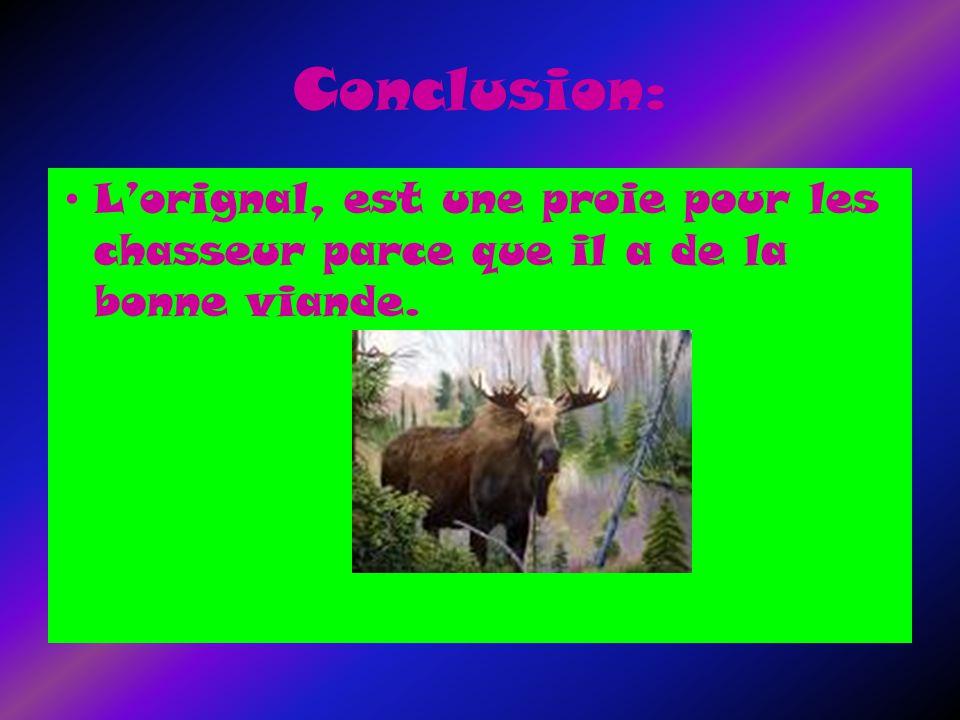 Conclusion: Lorignal, est une proie pour les chasseur parce que il a de la bonne viande.
