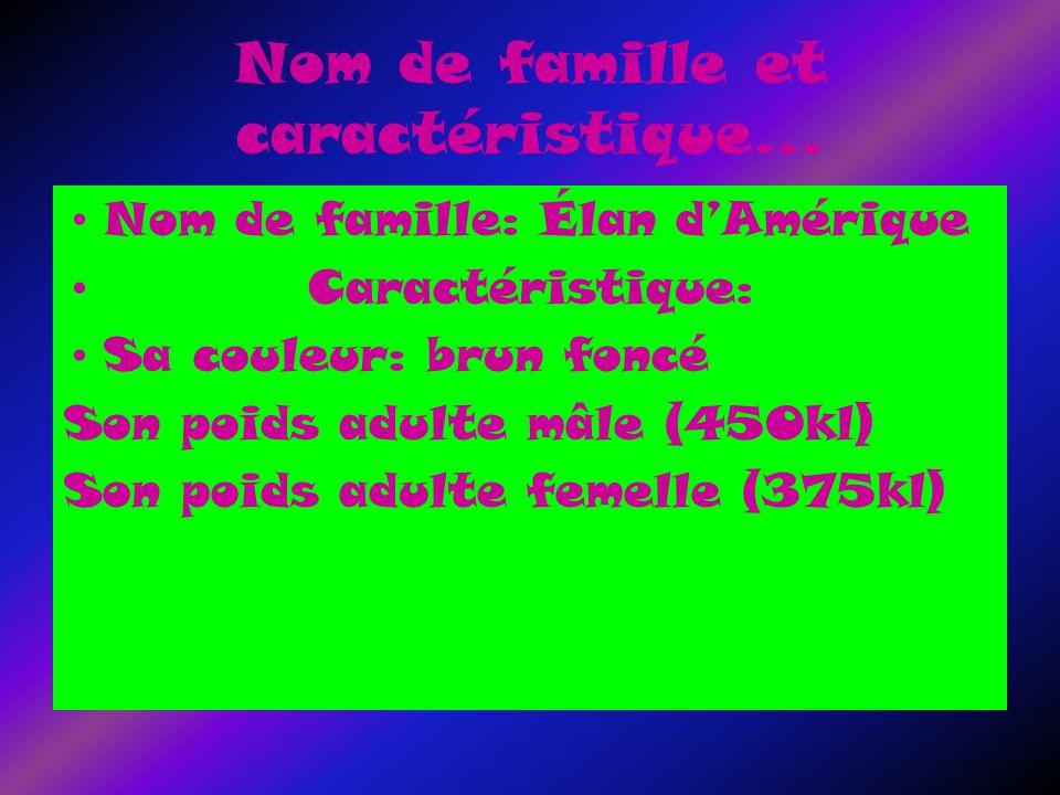 Nom de famille et caractéristique… Nom de famille: Élan dAmérique Caractéristique: Sa couleur: brun foncé Son poids adulte mâle (450kl) Son poids adulte femelle (375kl)