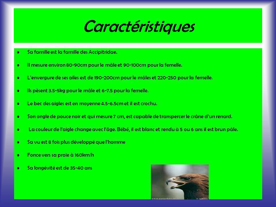 Caractéristiques Sa famille est la famille des Accipitridae. Il mesure environ 80-90cm pour le mâle et 90-100cm pour la femelle. Lenvergure de ses ail
