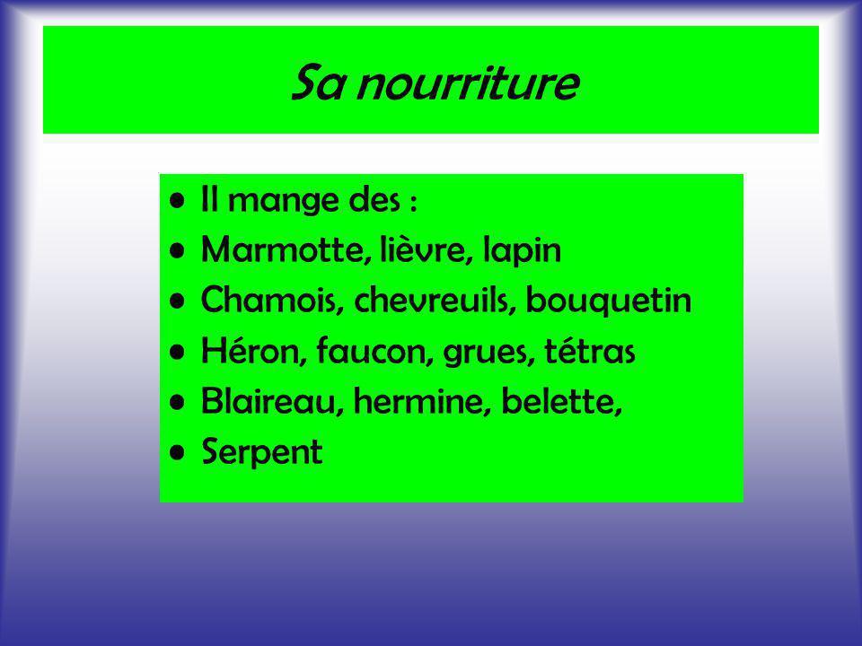 Sa nourriture Il mange des : Marmotte, lièvre, lapin Chamois, chevreuils, bouquetin Héron, faucon, grues, tétras Blaireau, hermine, belette, Serpent