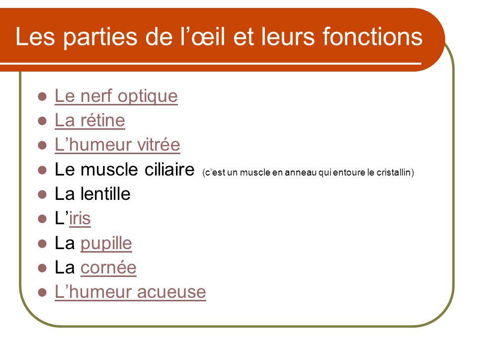 Les parties de lœil et leurs fonctions Le nerf optique La rétine Lhumeur vitrée Le muscle ciliaire (cest un muscle en anneau qui entoure le cristallin