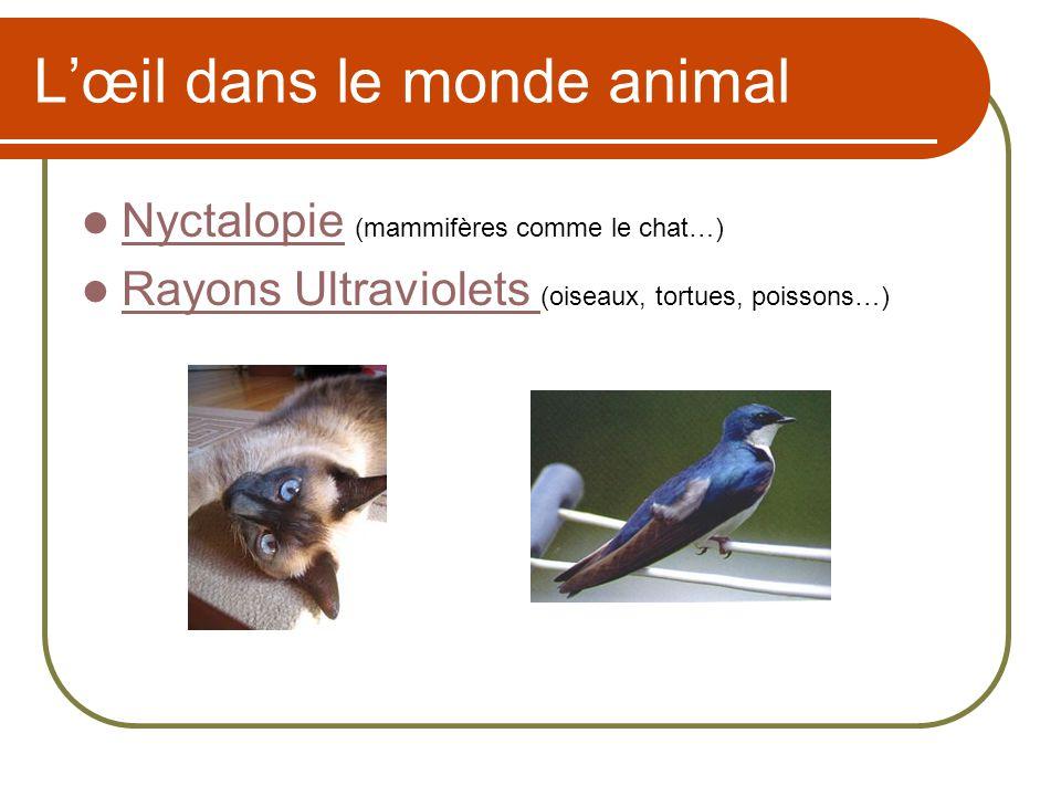 Lœil dans le monde animal Nyctalopie (mammifères comme le chat…) Nyctalopie Rayons Ultraviolets (oiseaux, tortues, poissons…) Rayons Ultraviolets
