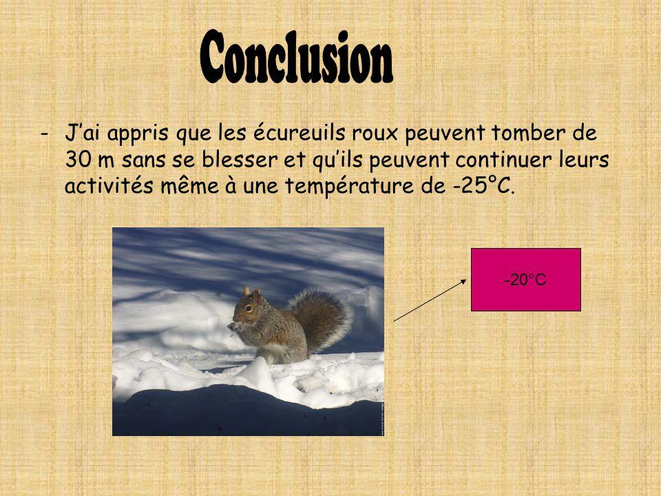 -Jai appris que les écureuils roux peuvent tomber de 30 m sans se blesser et quils peuvent continuer leurs activités même à une température de -25°C.