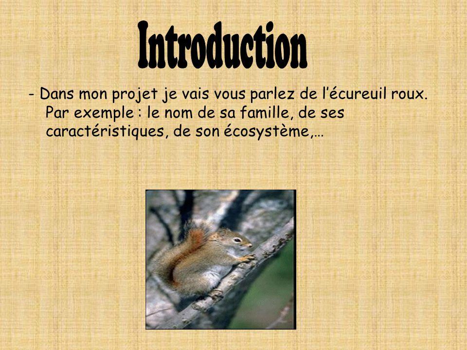 - Dans mon projet je vais vous parlez de lécureuil roux. Par exemple : le nom de sa famille, de ses caractéristiques, de son écosystème,…