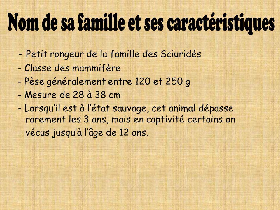 - Petit rongeur de la famille des Sciuridés - Classe des mammifère - Pèse généralement entre 120 et 250 g - Mesure de 28 à 38 cm - Lorsquil est à léta