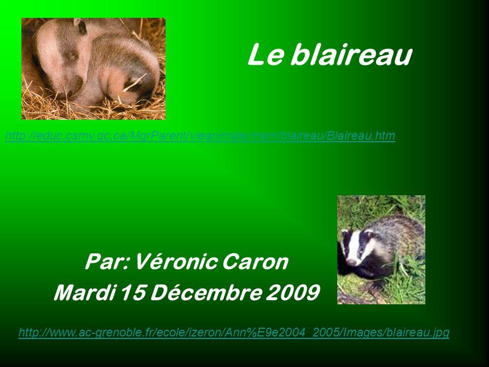 Le blaireau Par: Véronic Caron Mardi 15 Décembre 2009 http://educ.csmv.qc.ca/MgrParent/vieanimale/mam/blaireau/Blaireau.htm http://www.ac-grenoble.fr/