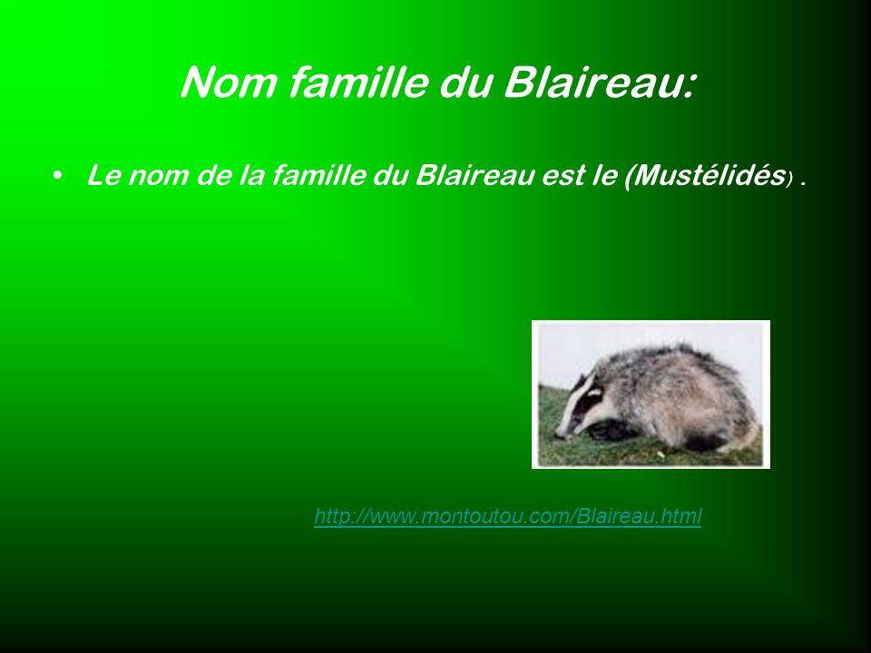Nom famille du Blaireau: Le nom de la famille du Blaireau est le (Mustélidés ). http://www.montoutou.com/Blaireau.html