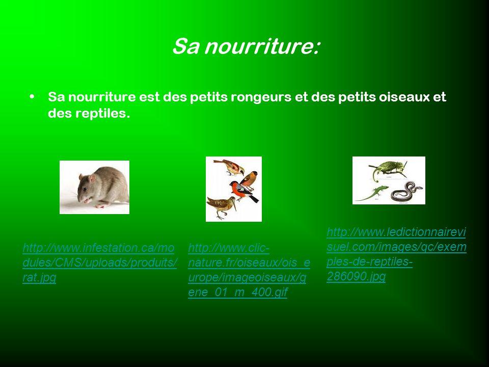 Sa nourriture: Sa nourriture est des petits rongeurs et des petits oiseaux et des reptiles. http://www.infestation.ca/mo dules/CMS/uploads/produits/ r