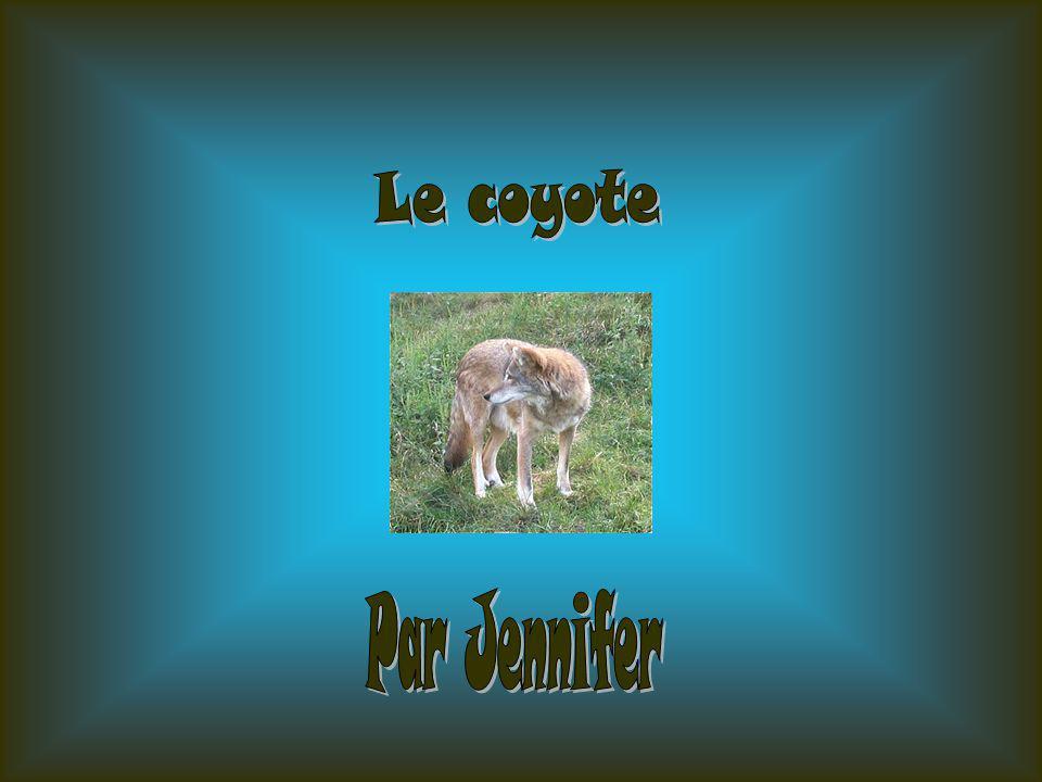 - Jai choisi le coyote car je le connais pas vraiment, cest pour sa que je lai choisi, pour mieux le connaître.