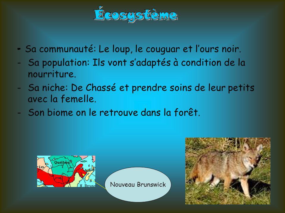 -Les composantes biotiques: -Le loup -Les plantes -Les petits mammifères etc.