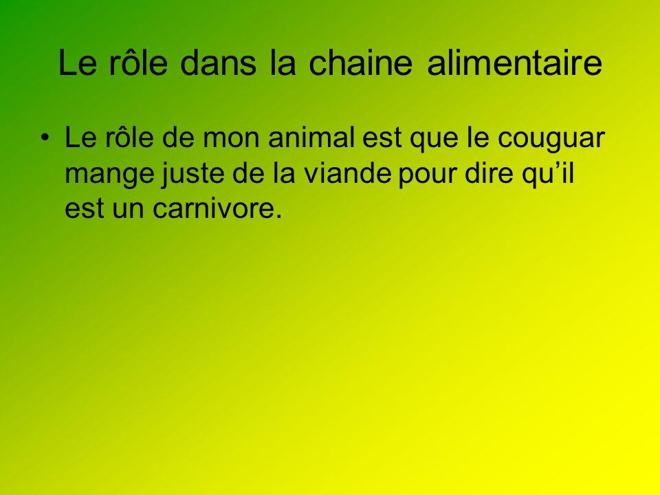 Le rôle dans la chaine alimentaire Le rôle de mon animal est que le couguar mange juste de la viande pour dire quil est un carnivore.