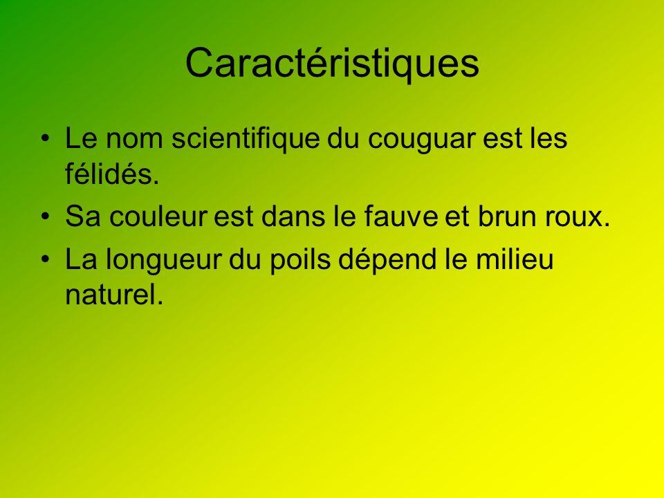 Caractéristiques Le nom scientifique du couguar est les félidés. Sa couleur est dans le fauve et brun roux. La longueur du poils dépend le milieu natu