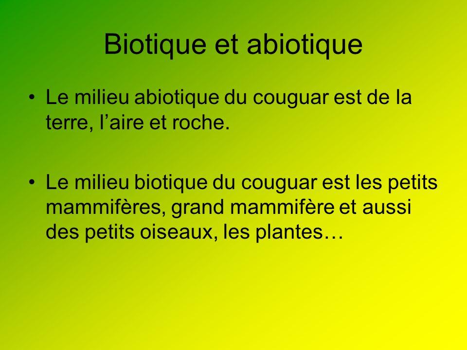 Biotique et abiotique Le milieu abiotique du couguar est de la terre, laire et roche. Le milieu biotique du couguar est les petits mammifères, grand m