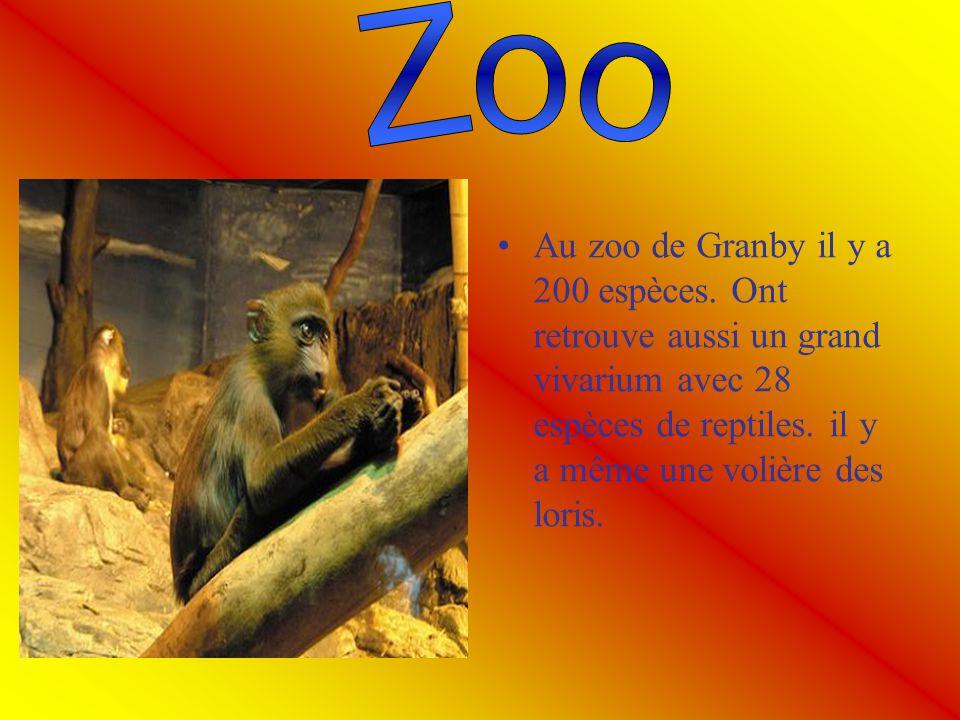 Au zoo de Granby il y a 200 espèces. Ont retrouve aussi un grand vivarium avec 28 espèces de reptiles. il y a même une volière des loris.