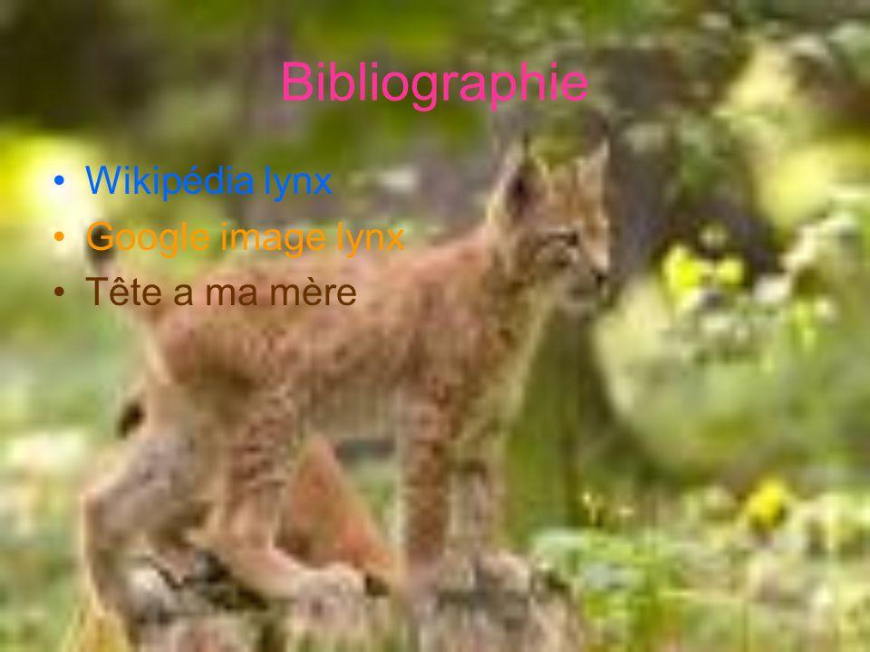 Bibliographie Wikipédia lynx Google image lynx Tête a ma mère
