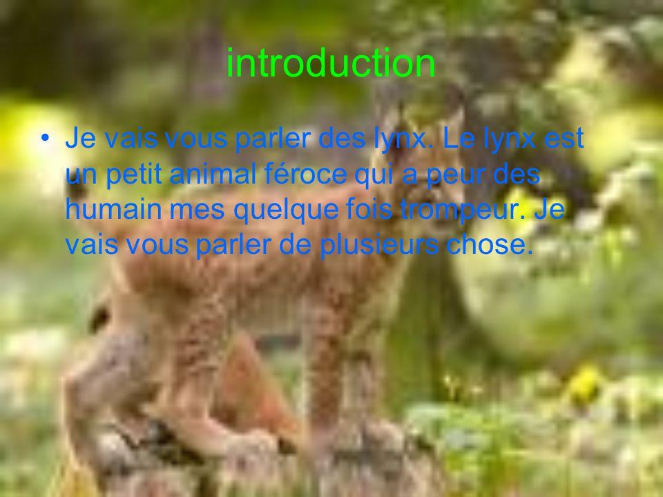introduction Je vais vous parler des lynx. Le lynx est un petit animal féroce qui a peur des humain mes quelque fois trompeur. Je vais vous parler de