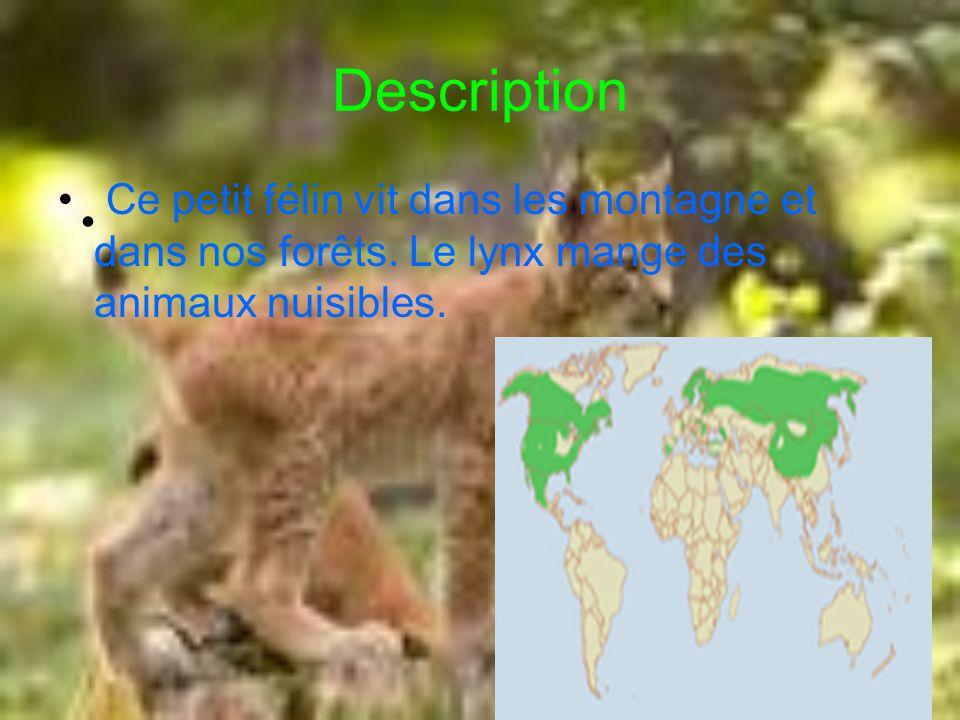Description Ce petit félin vit dans les montagne et dans nos forêts. Le lynx mange des animaux nuisibles.