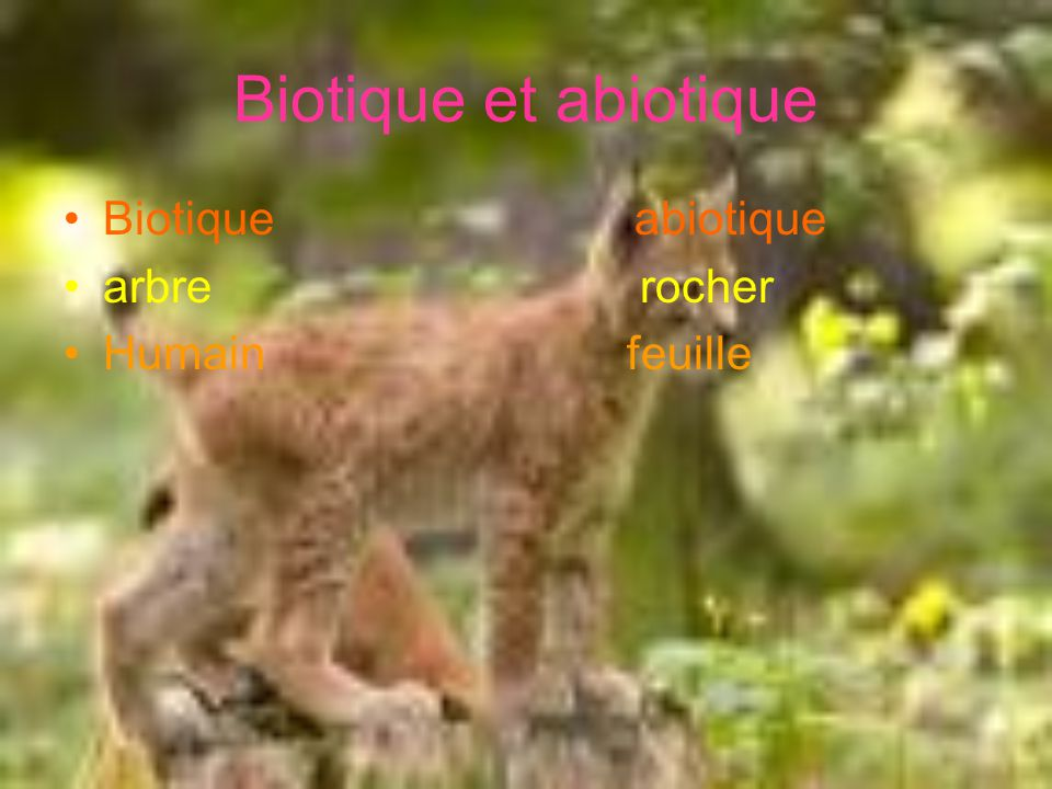 Biotique et abiotique Biotique abiotique arbre rocher Humain feuille