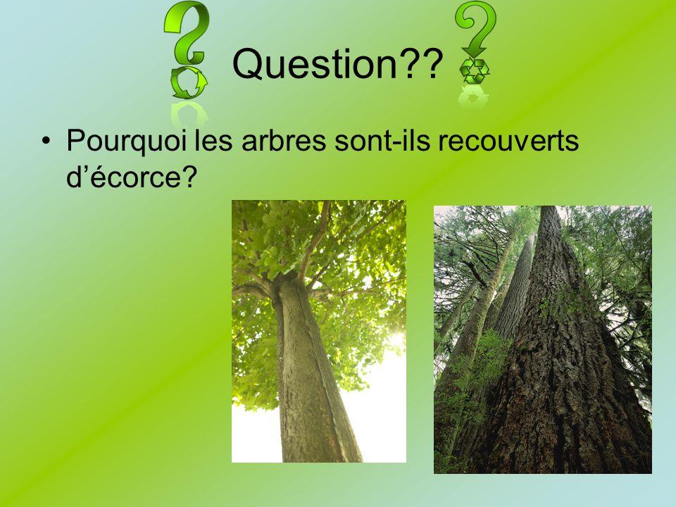 Question?? Pourquoi les arbres sont-ils recouverts décorce?