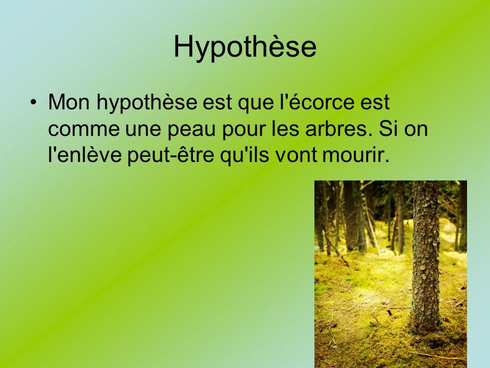 Hypothèse Mon hypothèse est que l'écorce est comme une peau pour les arbres. Si on l'enlève peut-être qu'ils vont mourir.
