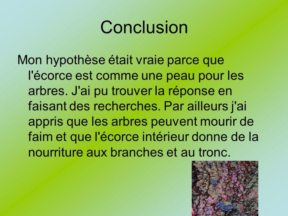 Conclusion Mon hypothèse était vraie parce que l'écorce est comme une peau pour les arbres. J'ai pu trouver la réponse en faisant des recherches. Par