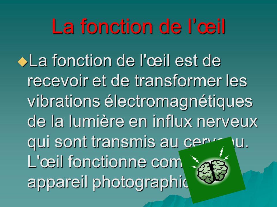 La fonction de lœil La fonction de l'œil est de recevoir et de transformer les vibrations électromagnétiques de la lumière en influx nerveux qui sont