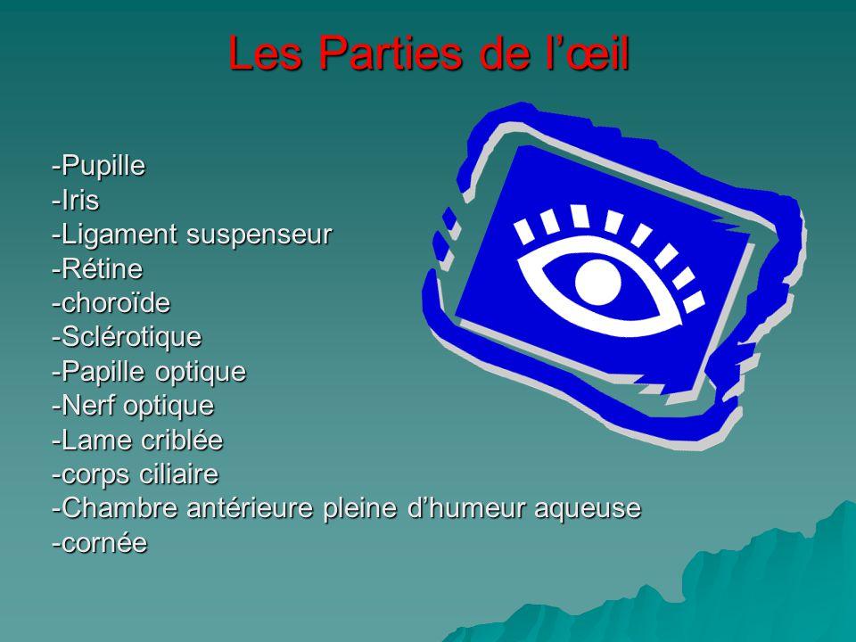 Les Parties de lœil -Pupille-Iris -Ligament suspenseur -Rétine-choroïde-Sclérotique -Papille optique -Nerf optique -Lame criblée -corps ciliaire -Cham