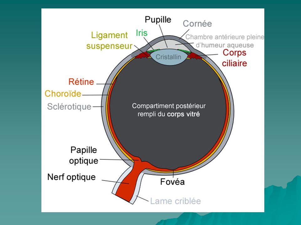 Verre de contact et lunette Les verres de contact alternative des lunettes¸ pour correction de la vue.