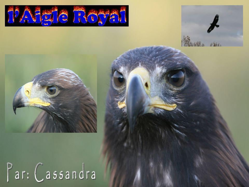 http://fr.wikipedia.org/w iki/Aigle_royalhttp://fr.wikipedia.org/w iki/Aigle_royal http://educ.csmv.qc.ca/MgrParent/vi eanimale/ois/aigleroy/aigleroyal.ht m PPT: http://www.nvsd44.bc.ca/~/media/4F31F92F 84AD4EEBA866EE42542F21BD.ashx.