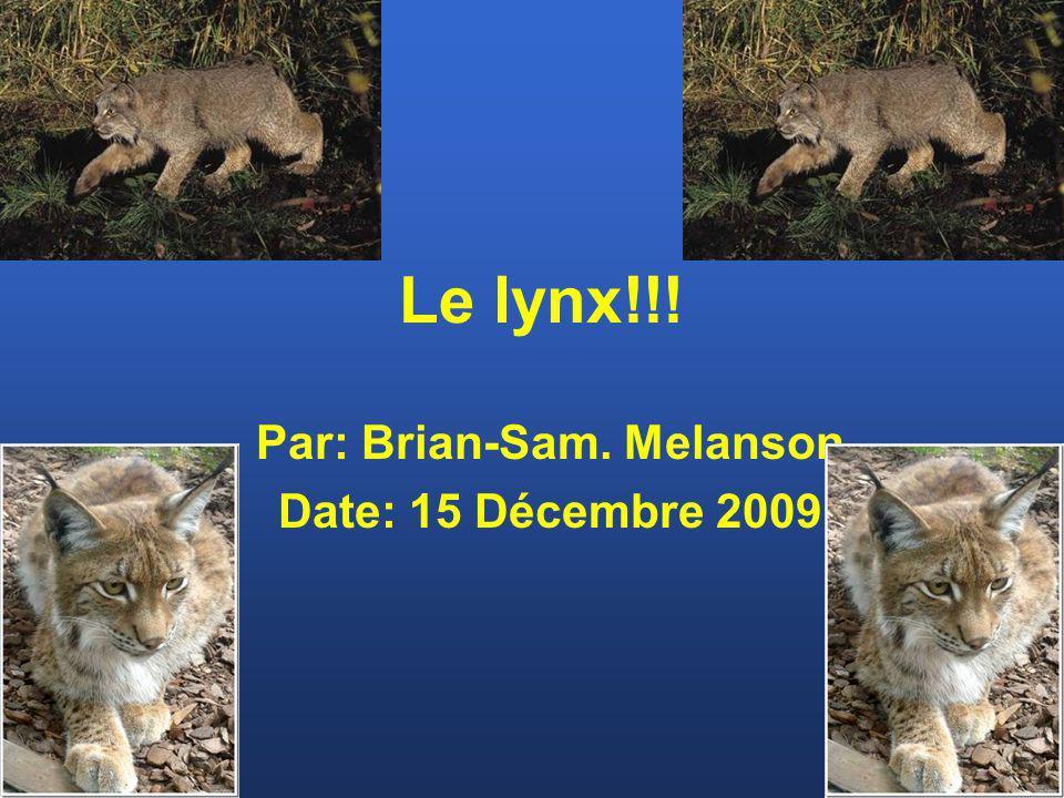 Le lynx!!! Par: Brian-Sam. Melanson Date: 15 Décembre 2009