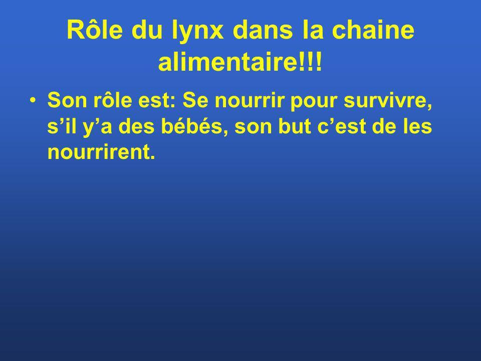 Rôle du lynx dans la chaine alimentaire!!! Son rôle est: Se nourrir pour survivre, sil ya des bébés, son but cest de les nourrirent.