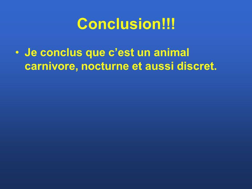 Conclusion!!! Je conclus que cest un animal carnivore, nocturne et aussi discret.