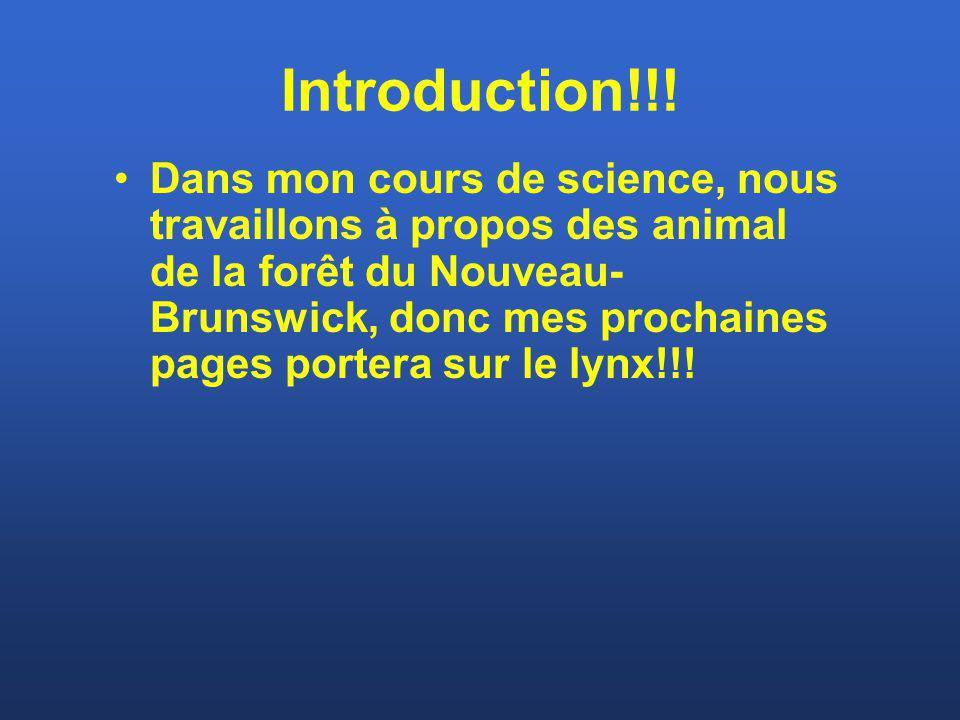 Introduction!!! Dans mon cours de science, nous travaillons à propos des animal de la forêt du Nouveau- Brunswick, donc mes prochaines pages portera s
