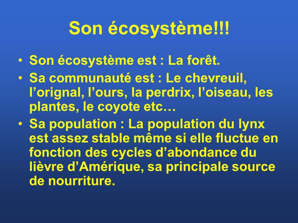 Son écosystème!!! Son écosystème est : La forêt. Sa communauté est : Le chevreuil, lorignal, lours, la perdrix, loiseau, les plantes, le coyote etc… S