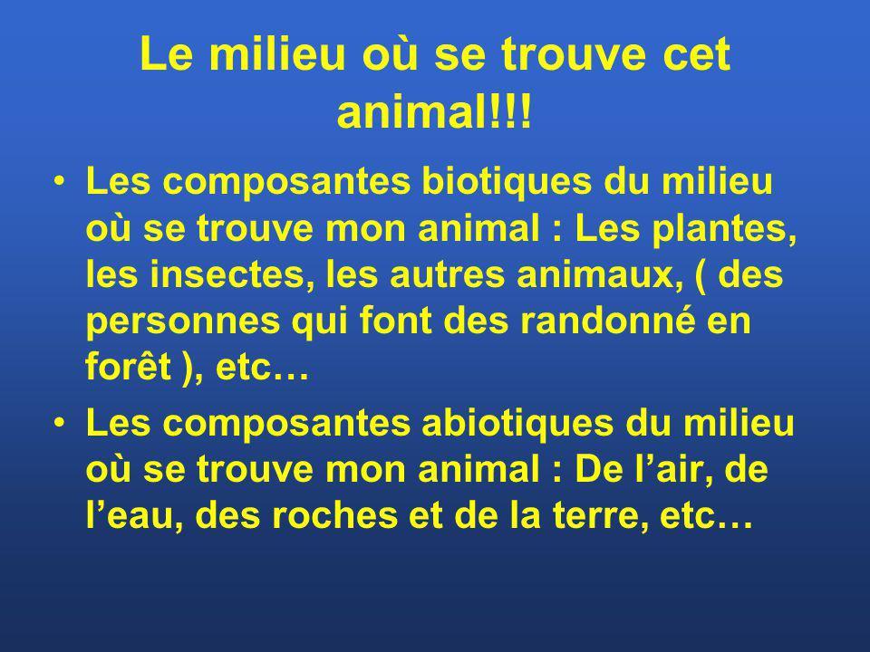 Le milieu où se trouve cet animal!!! Les composantes biotiques du milieu où se trouve mon animal : Les plantes, les insectes, les autres animaux, ( de