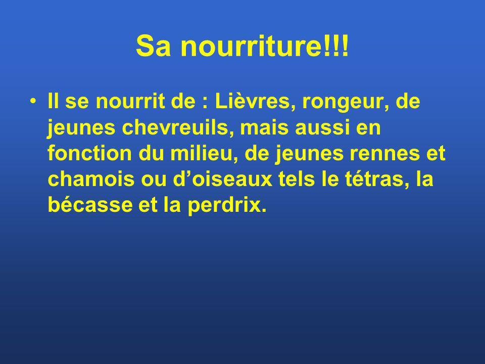 Sa nourriture!!! Il se nourrit de : Lièvres, rongeur, de jeunes chevreuils, mais aussi en fonction du milieu, de jeunes rennes et chamois ou doiseaux