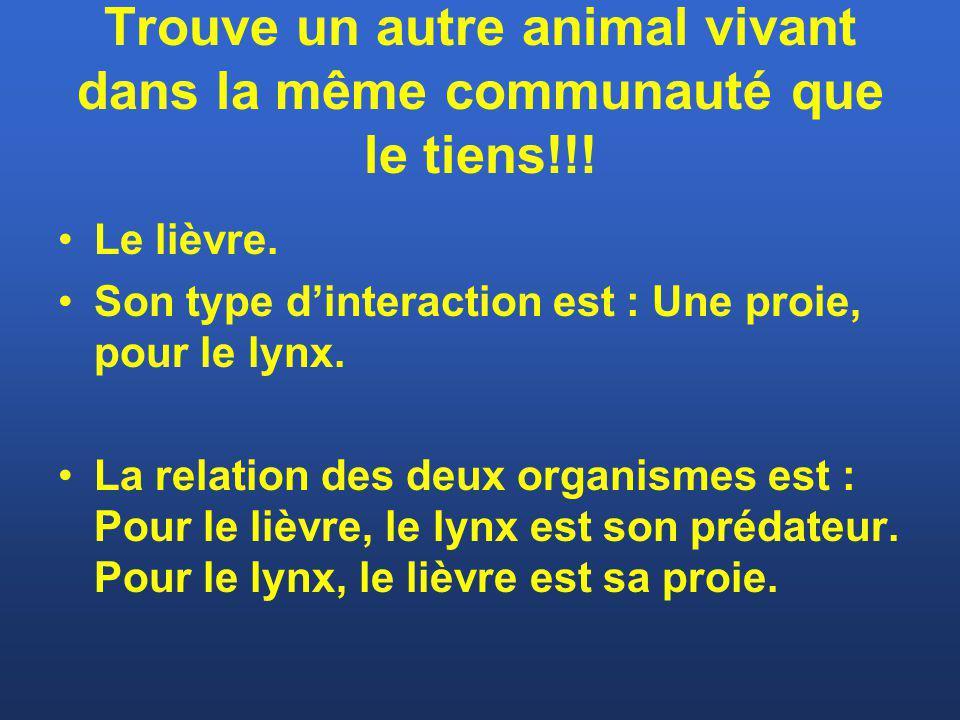 Trouve un autre animal vivant dans la même communauté que le tiens!!! Le lièvre. Son type dinteraction est : Une proie, pour le lynx. La relation des