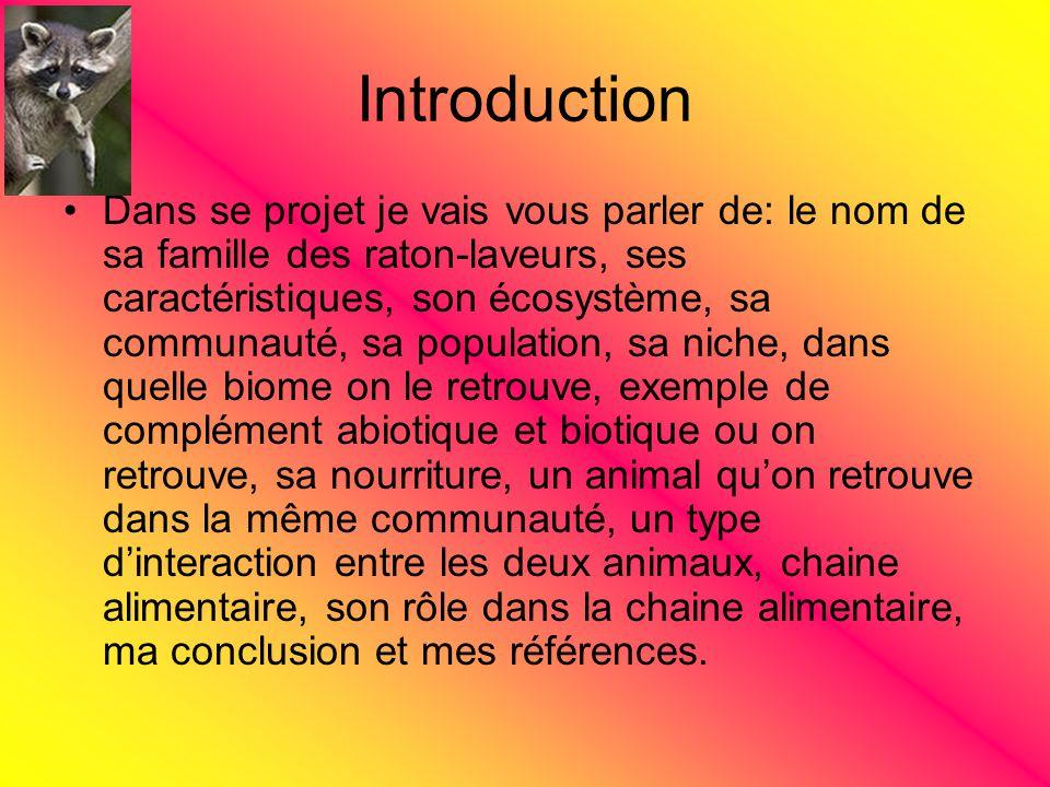 Introduction Dans se projet je vais vous parler de: le nom de sa famille des raton-laveurs, ses caractéristiques, son écosystème, sa communauté, sa po