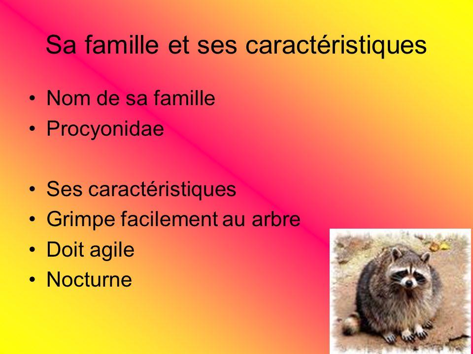 Sa famille et ses caractéristiques Nom de sa famille Procyonidae Ses caractéristiques Grimpe facilement au arbre Doit agile Nocturne