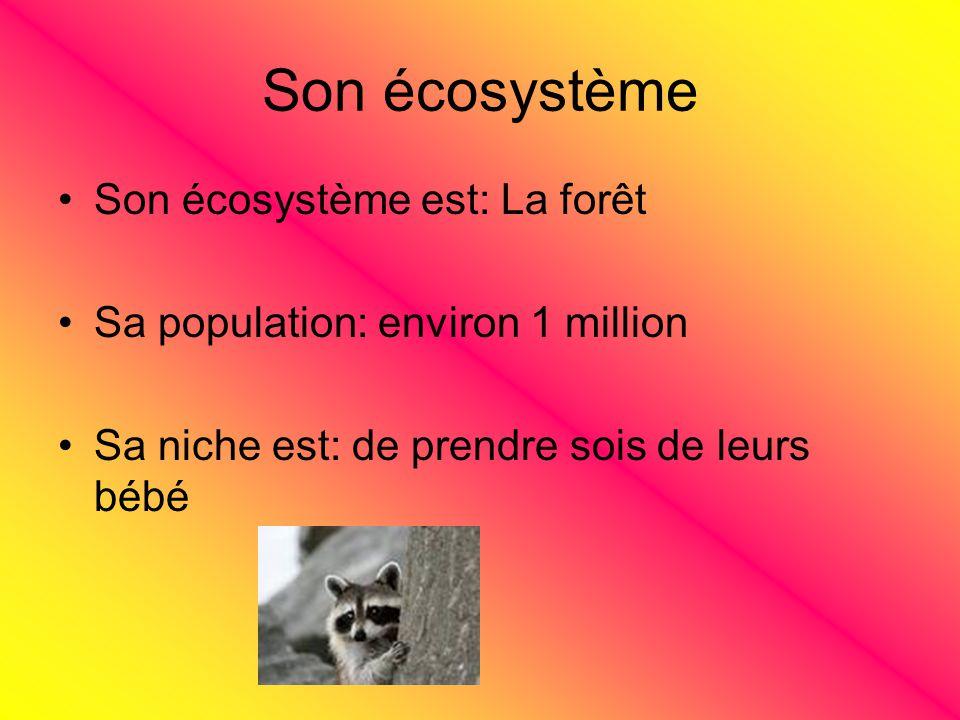 Son écosystème Son écosystème est: La forêt Sa population: environ 1 million Sa niche est: de prendre sois de leurs bébé