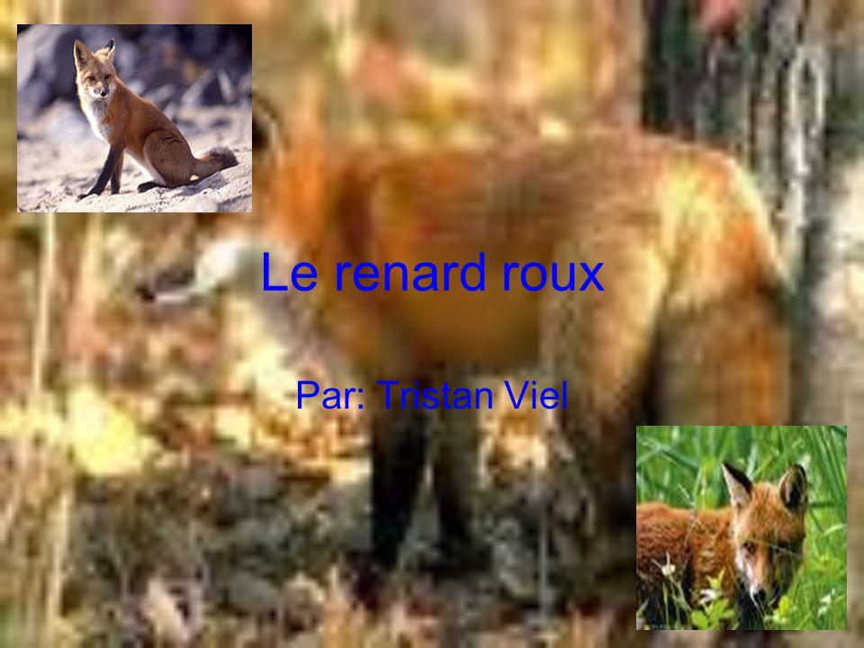 Références -fr.wikipedia.org/wiki/Renard_roux -google image -google web -http://www2.csdm.qc.ca/st- donat/5a_renardr.htm -http://pagesperso- orange.fr/lece1laclasse/renard/ren3.jpg
