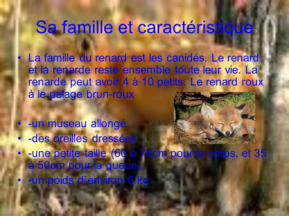 Écosystème communauté etc Le renard roux est solitaire il chasse tout seule.