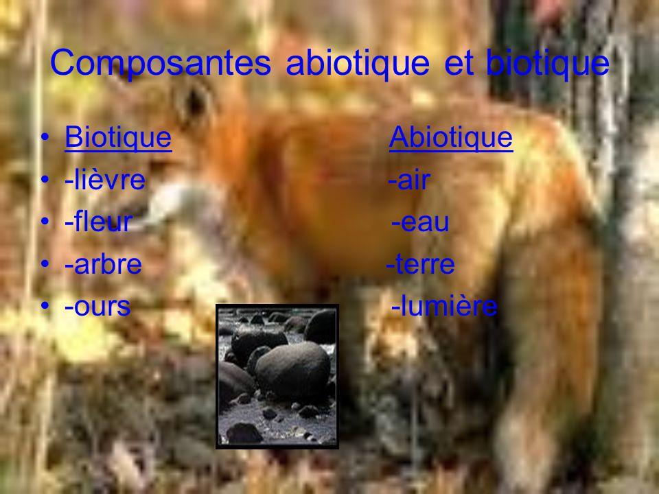 Nourriture Il est omnivores mais il mange surtout des petits mammifères et -des poules -des lapins de garennes -des lézards -des grenouilles Il aime plus les campagnols des champs.
