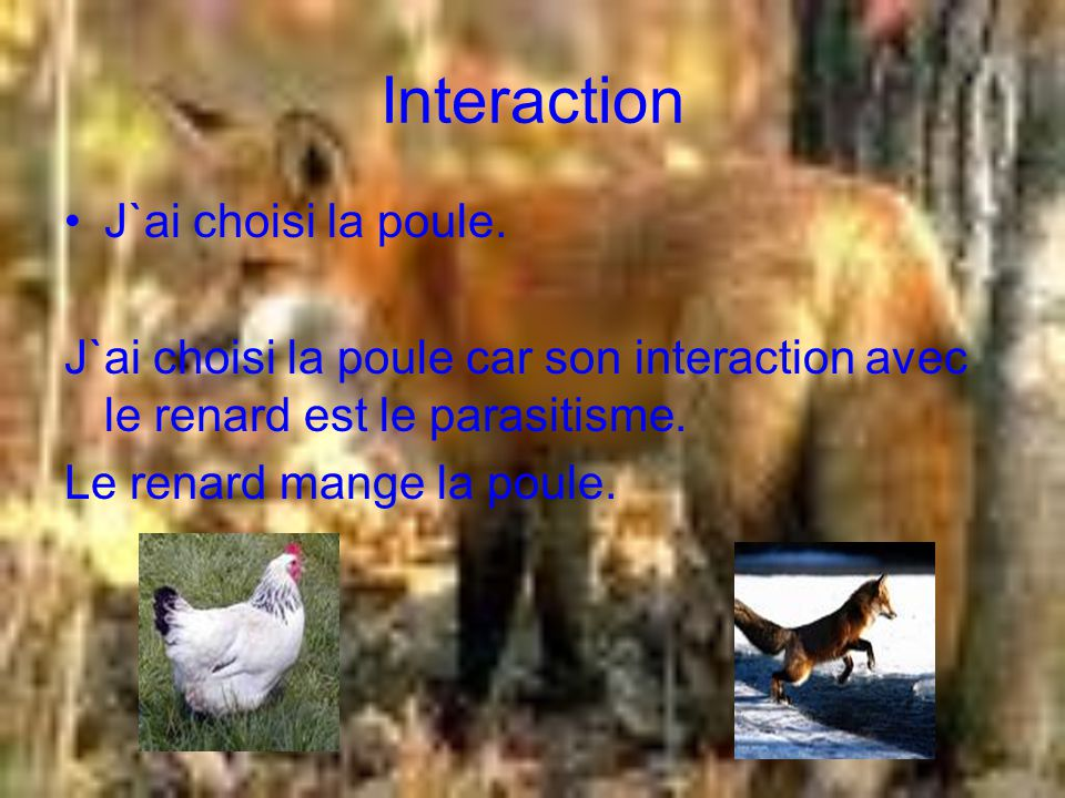 Chaine alimentaire